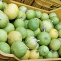 Bergamotto: proprietà e controindicazioni Benessere