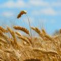 Dieta zero grano: come funziona e su quali principi si fonda Dieta