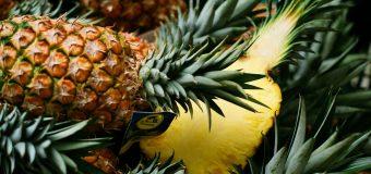 Dieta dell'ananas: tutto ciò che c'è da sapere