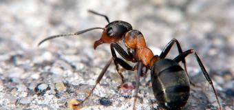 Formiche invadenti? Guida ai migliori rimedi naturali