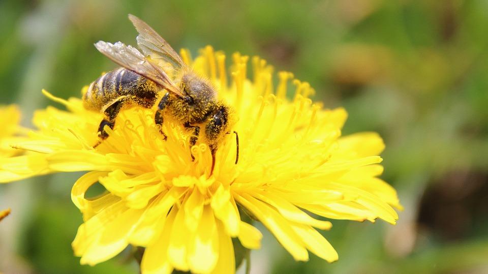 Allergie di Primavera: guida ai rimedi naturali anti-polline
