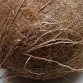 I benefici per la salute del cocco Proprietà degli alimenti