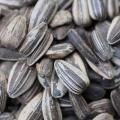 Tutto sui semi di girasole: ecco perché fanno bene alla salute Dieta