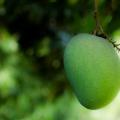 Benefici per la salute del mango Proprietà degli alimenti