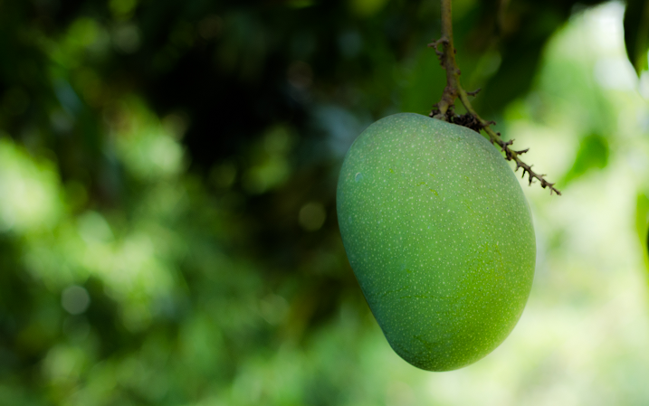 Benefici per la salute del mango