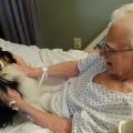 Lombardia, svolta pro pet therapy: cani e gatti entrano negli ospedali Medicina