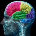 Lesioni cerebrali e demenza sarebbero connesse secondo un recente studio Malattie