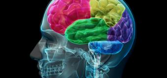 Un nuovo modello per studiare le lesioni cerebrali