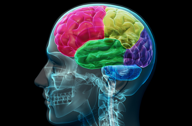 Come mantenere il cervello sano e attivo durante l'invecchiamento Psicologia