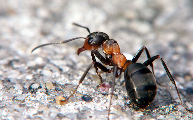 Formiche invadenti? Guida ai migliori rimedi naturali Rimedi