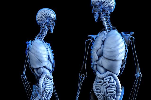 Insufficienza epatica acuta: cause, sintomi, rimedi e prevenzione Malattie