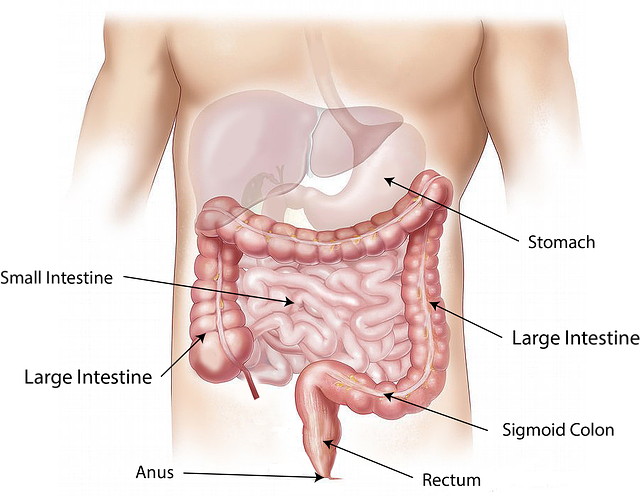 Malattia infiammatoria intestinale: celiaci 9 volte più a rischio Malattie
