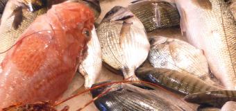 Intolleranza al pesce: sintomi e metodi di prevenzione