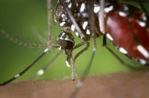 Virus del Nilo Occidentale: sintomi e fattori di rischio