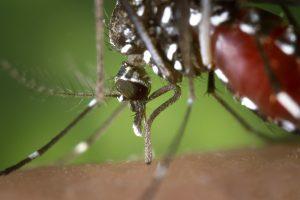 Virus del Nilo Occidentale: sintomi e fattori di rischio Malattie