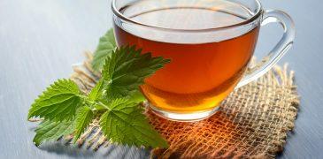 I 5 potenziali benefici del bere il tè all'ortica Proprietà degli alimenti