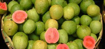 Guava (guaiave): quanti benefici per la salute!