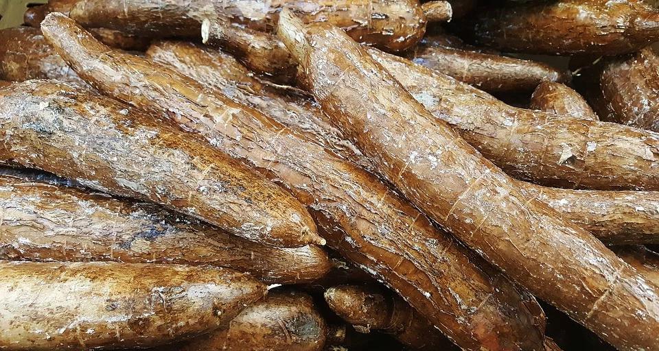 Manioca: benefici nutrizionali sì, ma poco rilevanti Proprietà degli alimenti